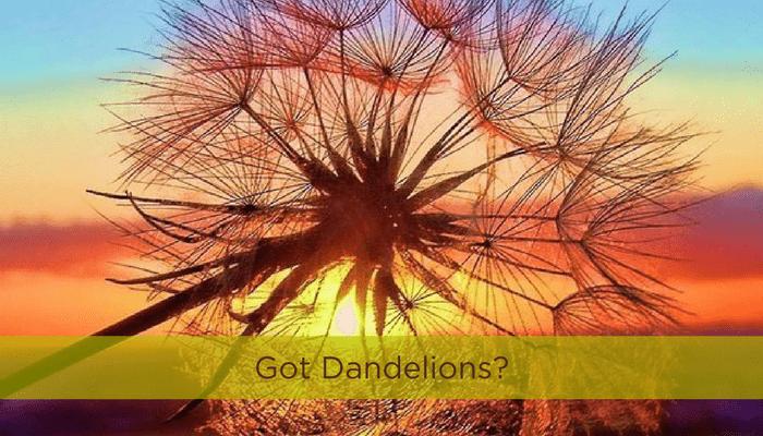Got Dandelions?