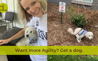 Does your dog help you practice Agility?